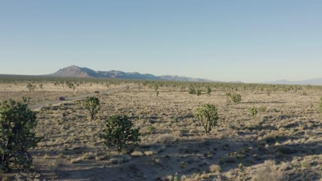 モハベ砂漠のジョシュアツリー - ジョシュアツリー国立公園点の映像素材/bロール