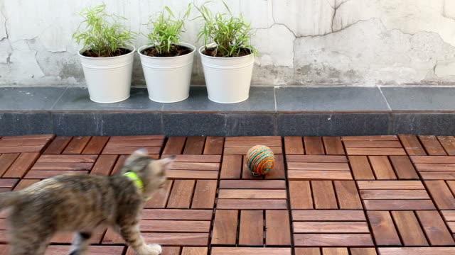 Joyful Cat video
