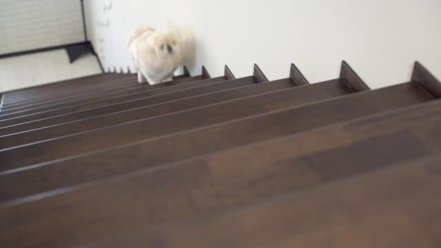 Joyful dog running up the stairs video