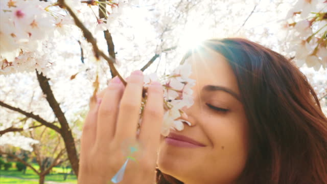 Joyful moments. Happy young woman enjoying smelling cherry blossom. Slow motion scene. smelling stock videos & royalty-free footage