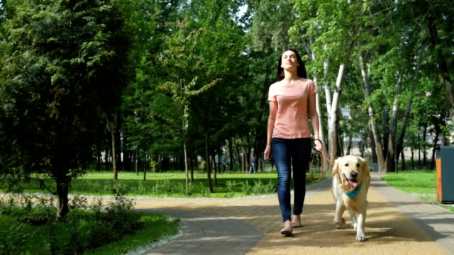 Joyful pretty woman walking with her dog Have a nice rest. Positive contented young woman smiling and walking in the park with her purebred dog purebred dog stock videos & royalty-free footage