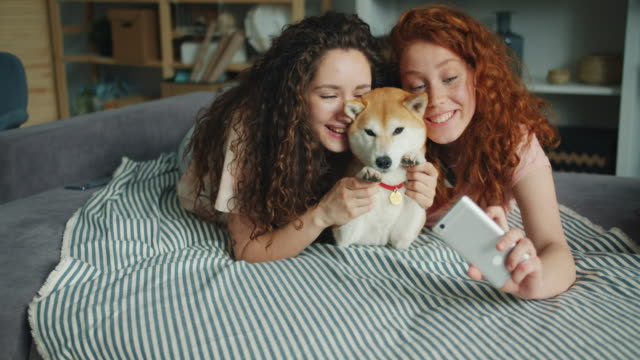 joyful sisters taking selfie with adorable doggy using smartphone at home - молодое животное стоковые видео и кадры b-roll
