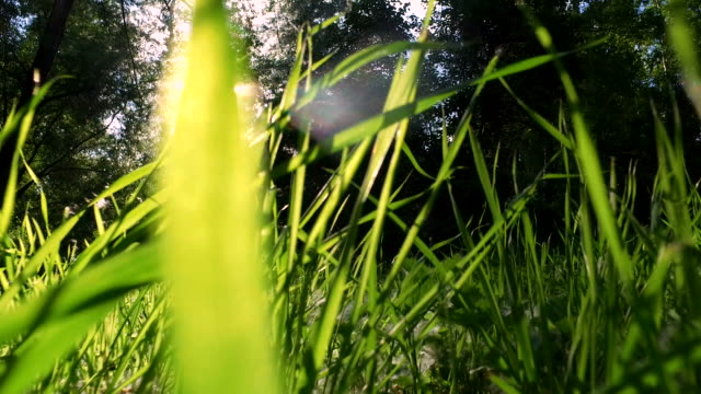juicy grass grew up on a meadow. - rack focus video stock e b–roll