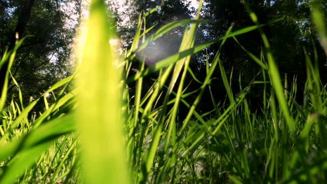 육즙이 잔디 풀밭에 자 랐 습니다. - 초점 이동 스톡 비디오 및 b-롤 화면