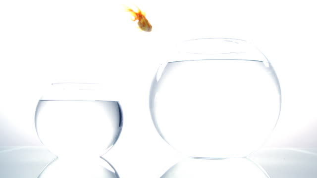 Jumping Gold Fish.. video