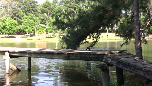 Jumping off the dock HD video