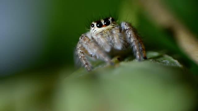 hoppande spindel - spindel arachnid bildbanksvideor och videomaterial från bakom kulisserna