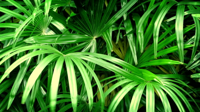 Jungle Plants In Breeze Closeup of large tropical plants swaying in the wind china east asia stock videos & royalty-free footage