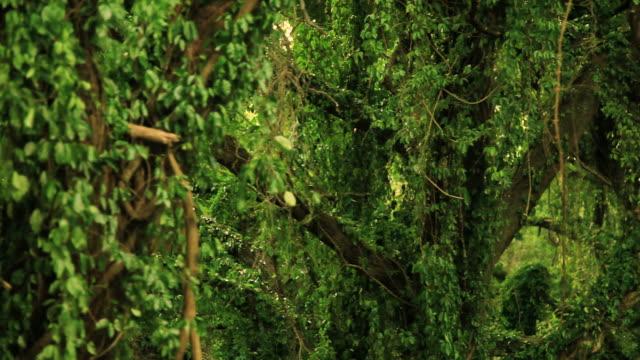 Jungle, rainforest, bird, Maui, Hawaii video