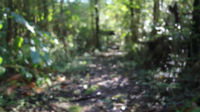 Jungle Walk POV video