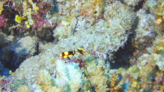vídeos de stock, filmes e b-roll de forma juvenil de orientes doces nas maldivas - equipamento de esporte aquático