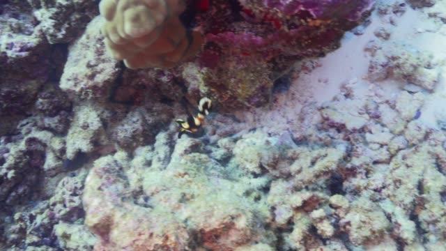 vídeos de stock, filmes e b-roll de doces orientais juvenis - equipamento de esporte aquático