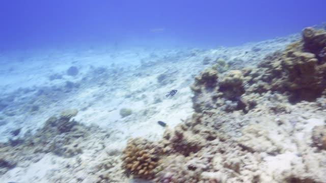 vídeos de stock, filmes e b-roll de snapper juvenil - equipamento de esporte aquático