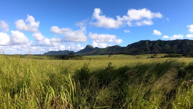 Kahili Mountain Park, Kauai footage from Kahili Ridge, a famous movie location in Kauai grass area stock videos & royalty-free footage