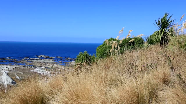 Kaikoura Peninsula Walkway, South Island, New Zealand video
