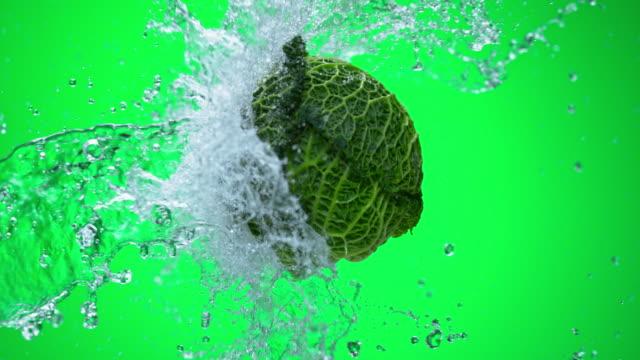 slo, mo, grünkohl, sonnengeküsste von wasser auf grünem hintergrund - grünkohl stock-videos und b-roll-filmmaterial
