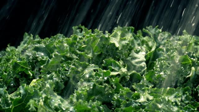 kale gemüse wird in wasserspray gewaschen - grünkohl stock-videos und b-roll-filmmaterial
