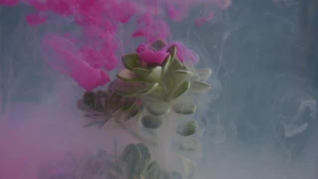 vidéos et rushes de kaléidoscope de plante avec de l'encre dans l'eau - botanique