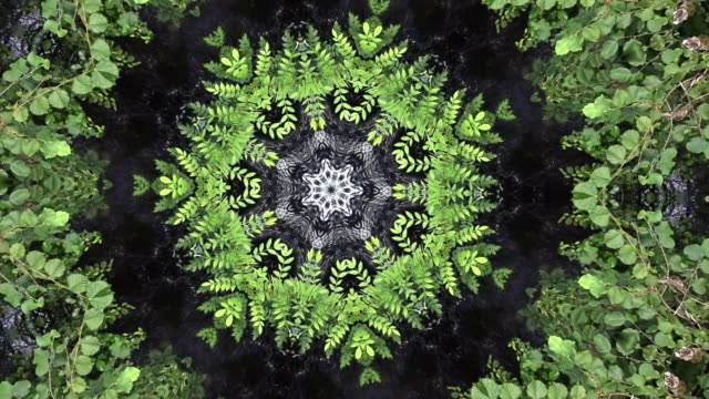 vídeos de stock e filmes b-roll de kaleidoscope view of water fountain with black background and shapes of flowers surrounded by green leaves that open and with changing movement of flowers and stream of water that give appearance to a live video - mosaicos flores