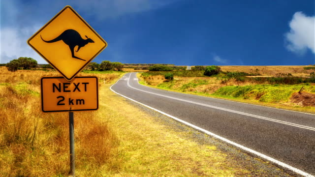 kangaroo crossing sign - road signs stock videos and b-roll footage