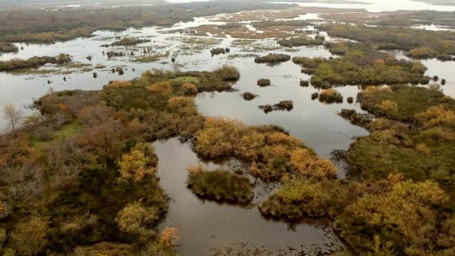 foresta di longoz, bursa, turchia, pianura alluvionale di karacabey - costa caratteristica costiera video stock e b–roll