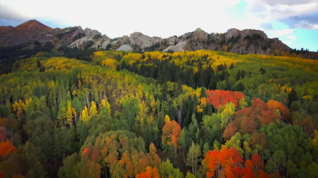 Kebler Pass Fall Colors and Mountain Views