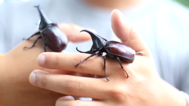 keeping pet beetles - жук стоковые видео и кадры b-roll