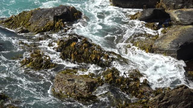Kelp video