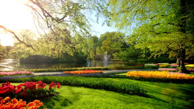 キューケンホフ花の庭。リッセ, オランダ。 - 花壇点の映像素材/bロール