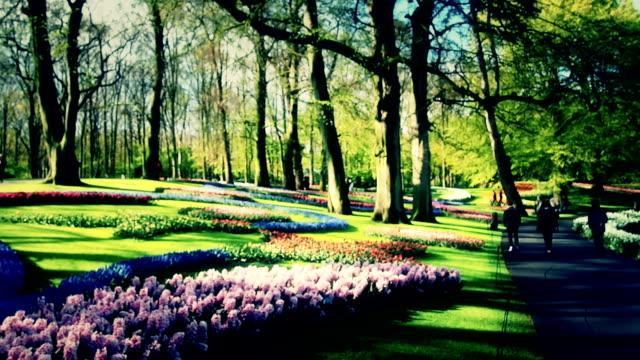 キューケンホフ、オランダ - キューケンホフ公園点の映像素材/bロール