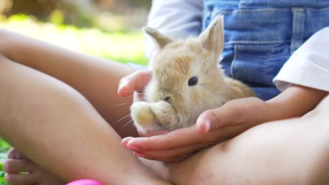 Kid and animal - A fluffy brown rabbit on girl's lap.