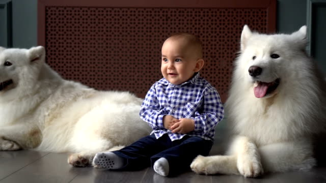 Kid and two big white fluffy dogs video