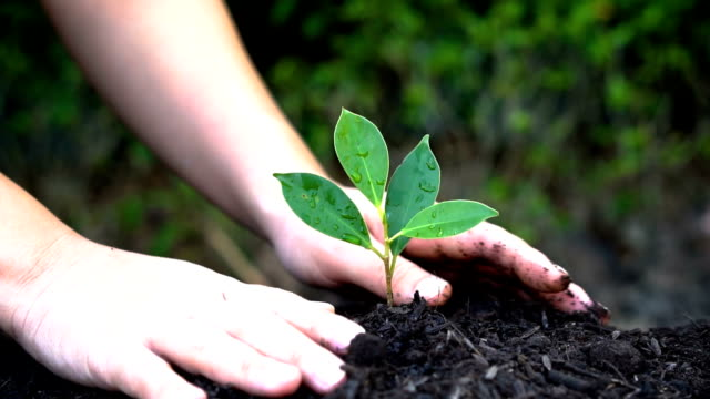 Kid hand growing, caring a young tree sprout. Slow motion shot of kid hand growing, caring a young tree sprout in fertile black soil. Concept of sustainable development, environment protection, farm agriculture and sustainability building. hope concept stock videos & royalty-free footage