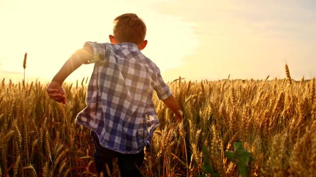 slo mo お子様に楽しいランニングの小麦のフィールド - 男の子点の映像素材/bロール