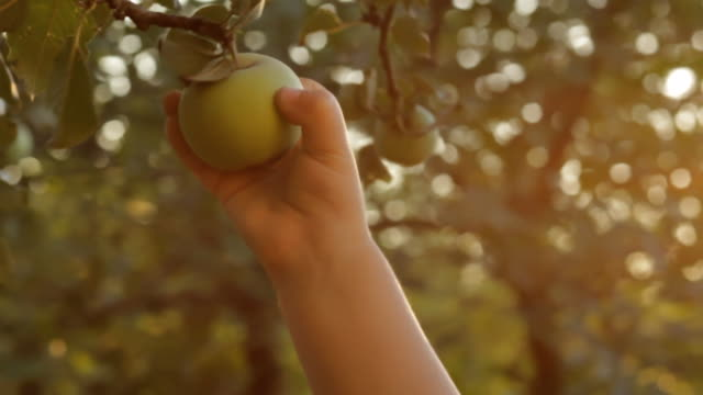 Kid of Two Picked an Apple video