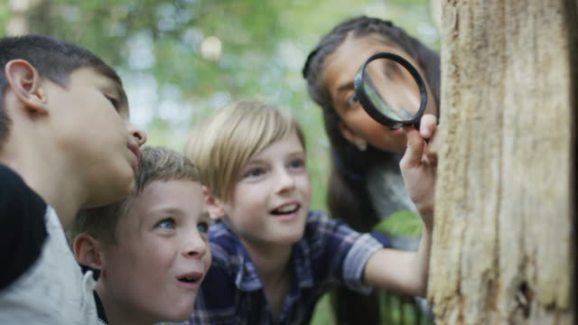 kids exploring the forest together - 8 9 anni video stock e b–roll