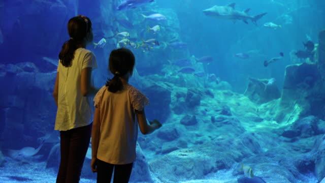 孩子們看在一個大的水族館的魚影片