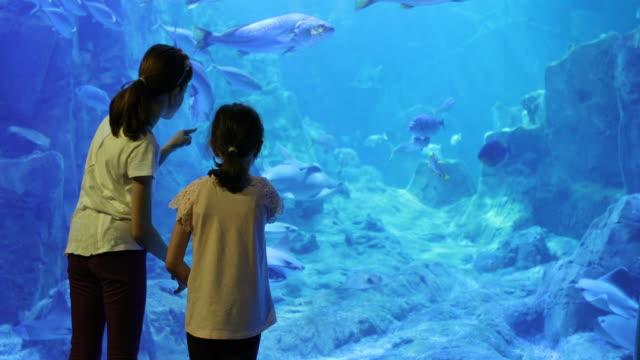 Kids looking at fish in a huge aquarium video