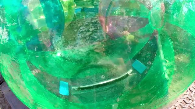 Kids Playing in a Transparent Water Walking Balls video