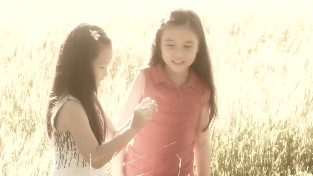 Kids talk and play in the Wheat Field. HD 1080P : Two little girl talk and play in the Wheat Field. sepia toned stock videos & royalty-free footage