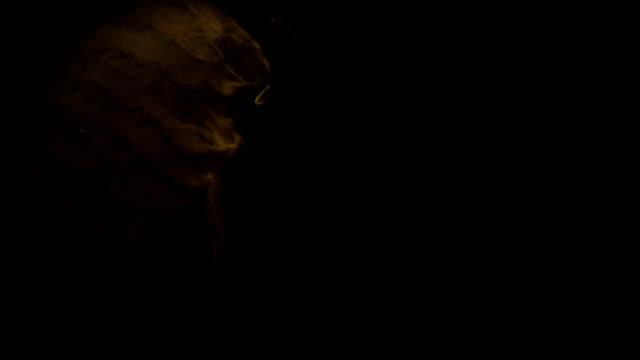 Kinetic Letters Y-Z video