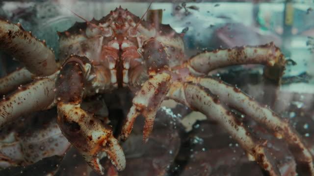 vídeos y material grabado en eventos de stock de cangrejo rey en el tanque de la lonja - bergen