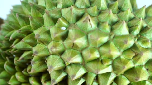 vídeos y material grabado en eventos de stock de pan: rey de las frutas, durian es una fruta tropical popular en países asiáticos - sudeste