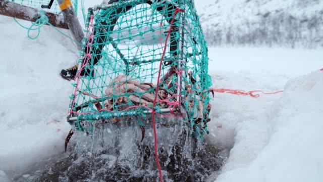 slo mo king's crab fishing - crostaceo video stock e b–roll
