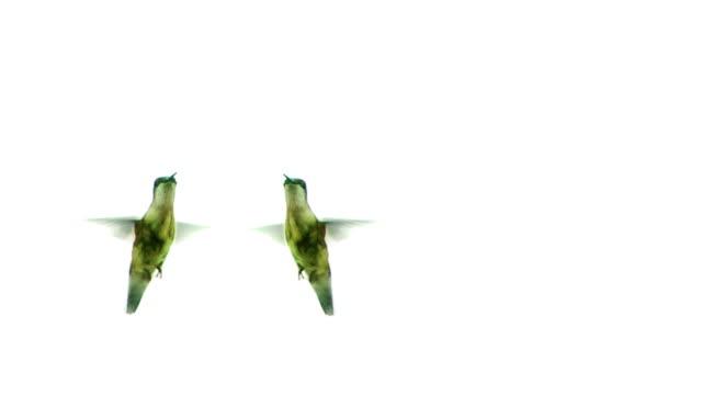 kissing 活発な鳥 - 2匹点の映像素材/bロール