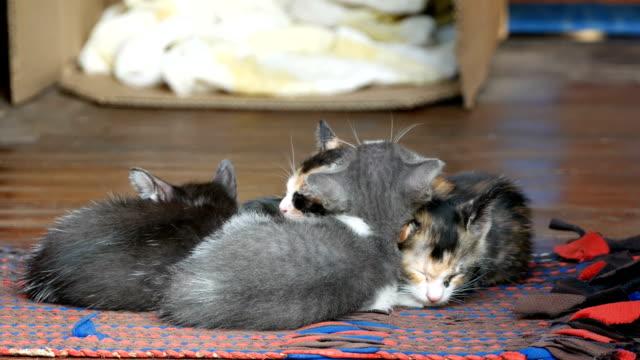kitten cat sleeping together video