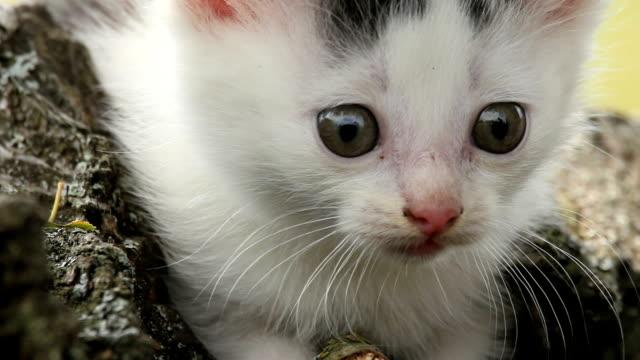 gattino primo piano - gatto dal pelo corto video stock e b–roll