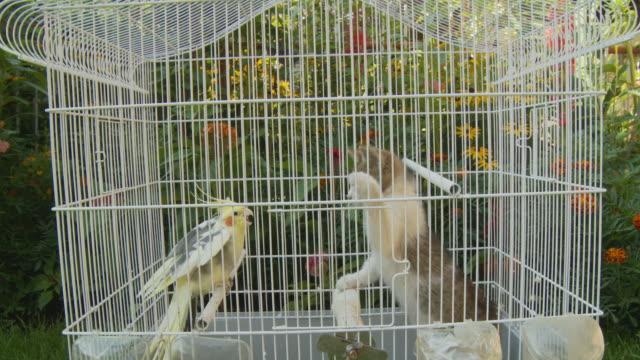 HD: Kitten In The Parrot's Birdcage video