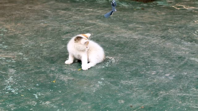 Kitten playing on the ground video