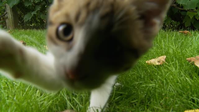 stockvideo's en b-roll-footage met hd: kitten playing with a mouse - kitten